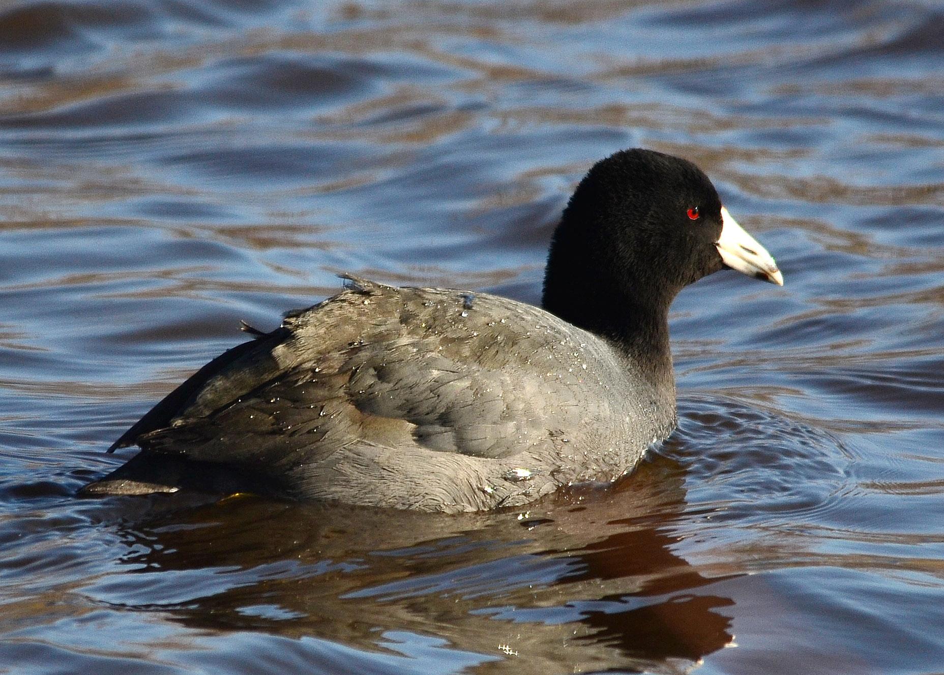 France bird checklist  Avibase  Bird Checklists of the World