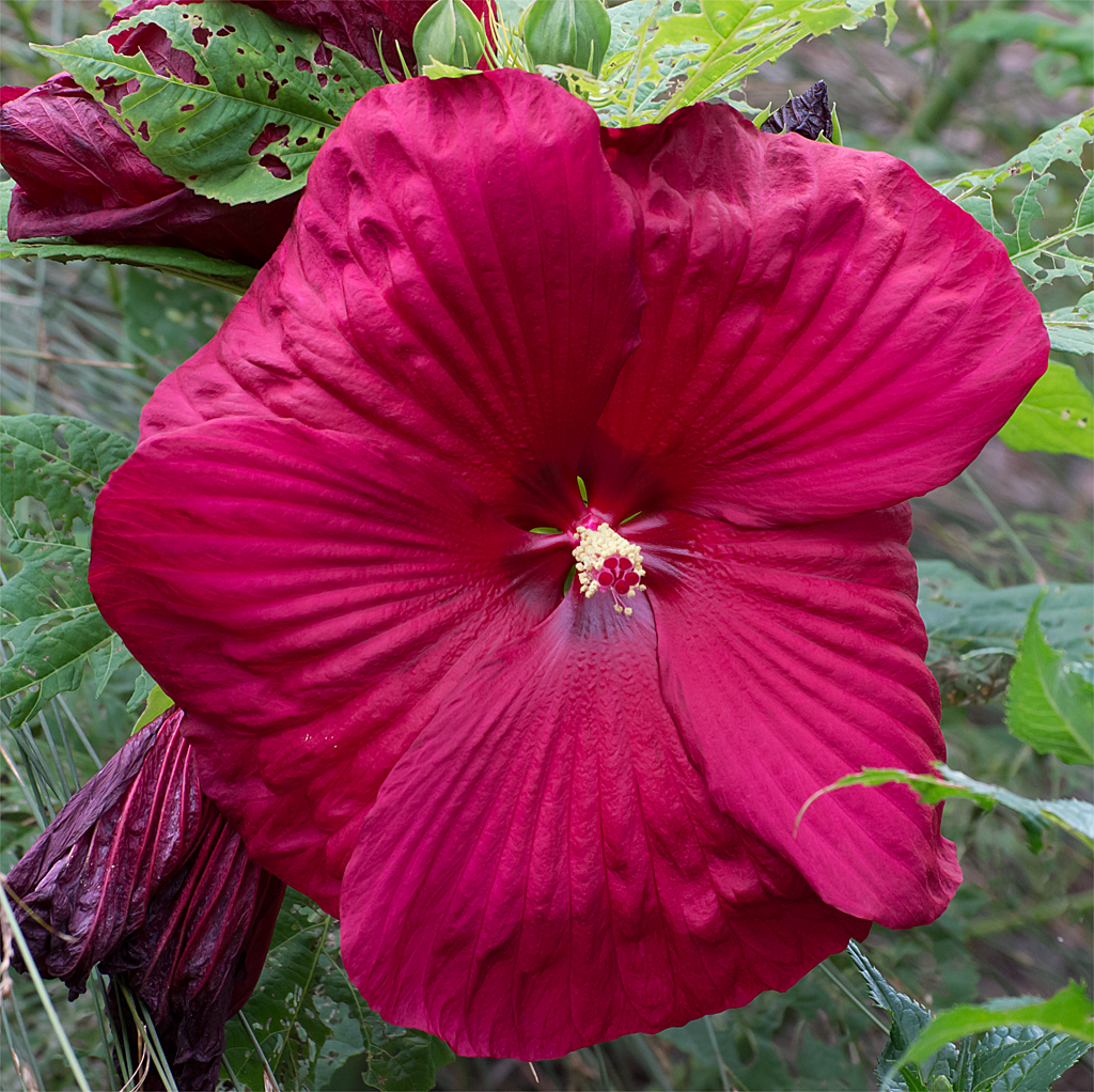 This large flower is growing in front of the Nature Center.