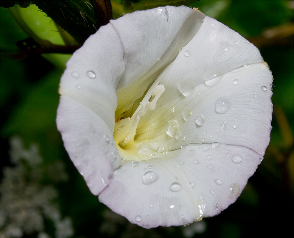 Rain drops usually enhance an image.
