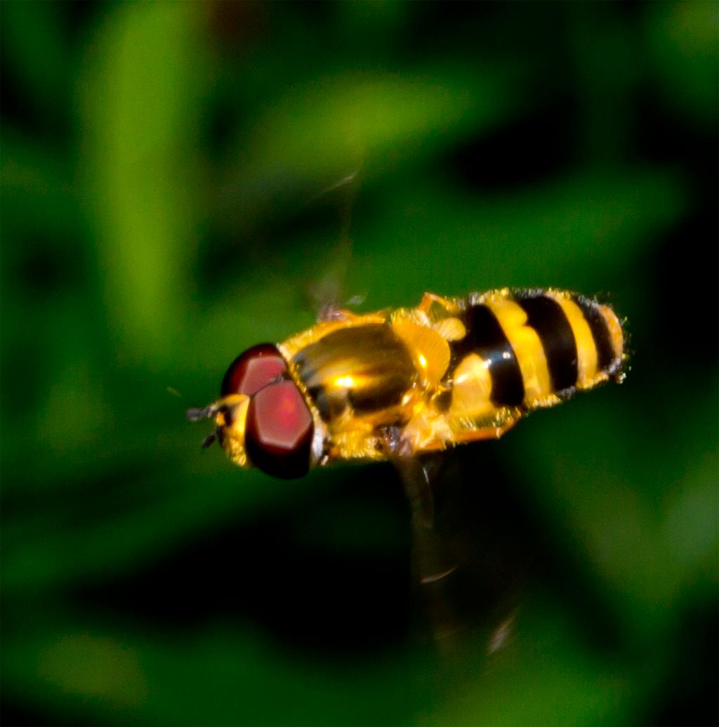Bee Mimic 105