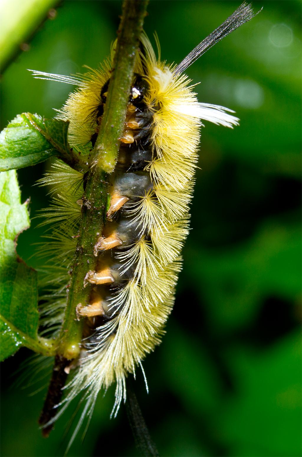 Caterpillar 166