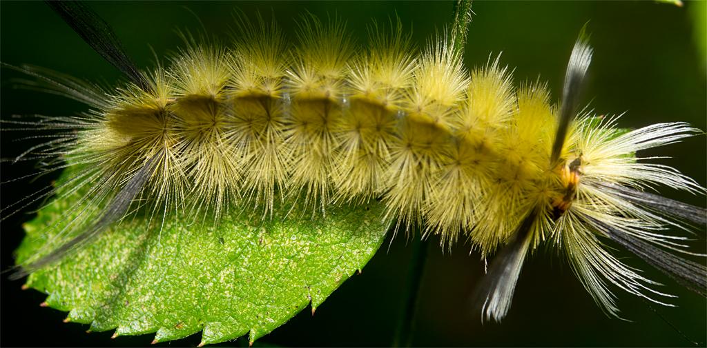 Caterpillar 168