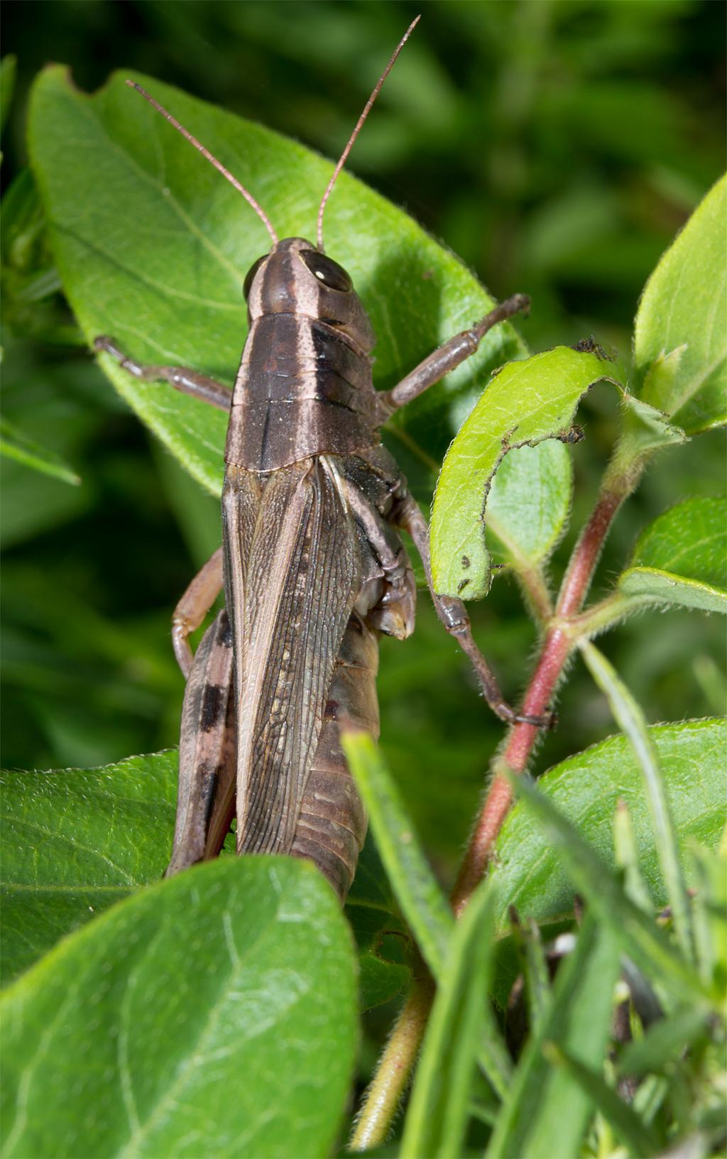 Differential Grasshopper 9