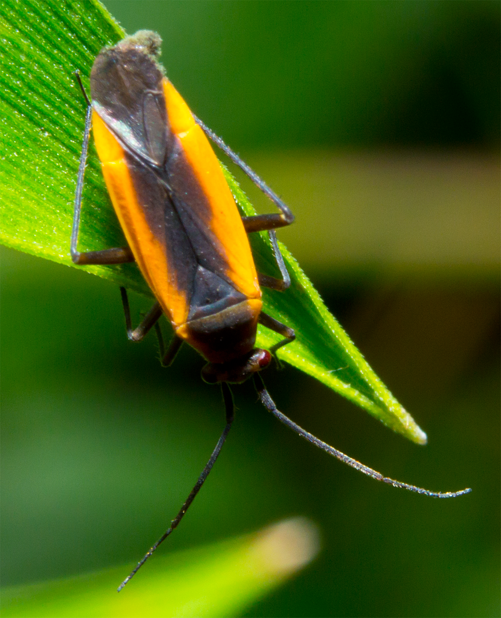 Insect 592