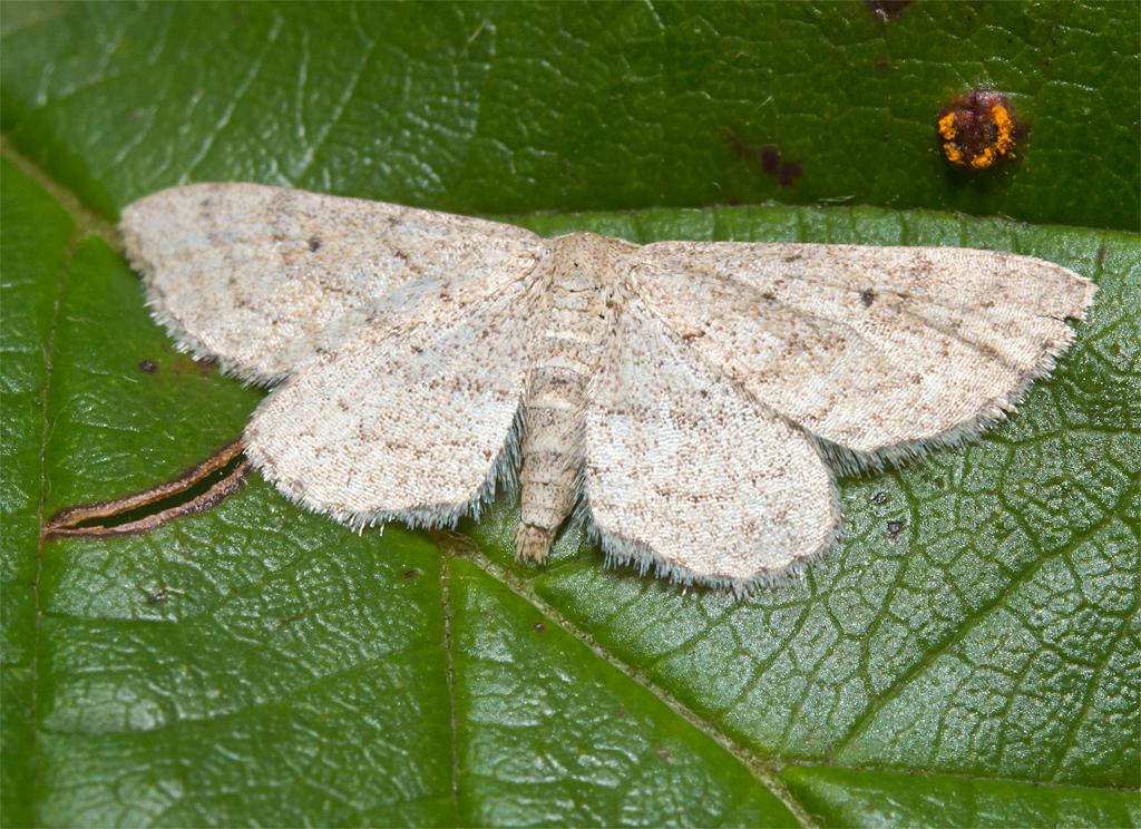 Moth 84