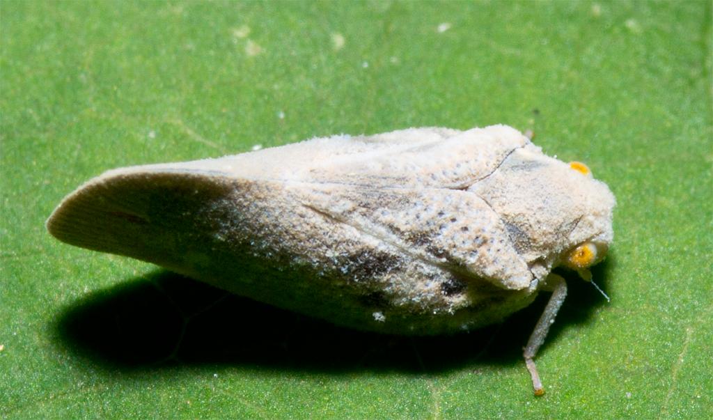 Moth 90