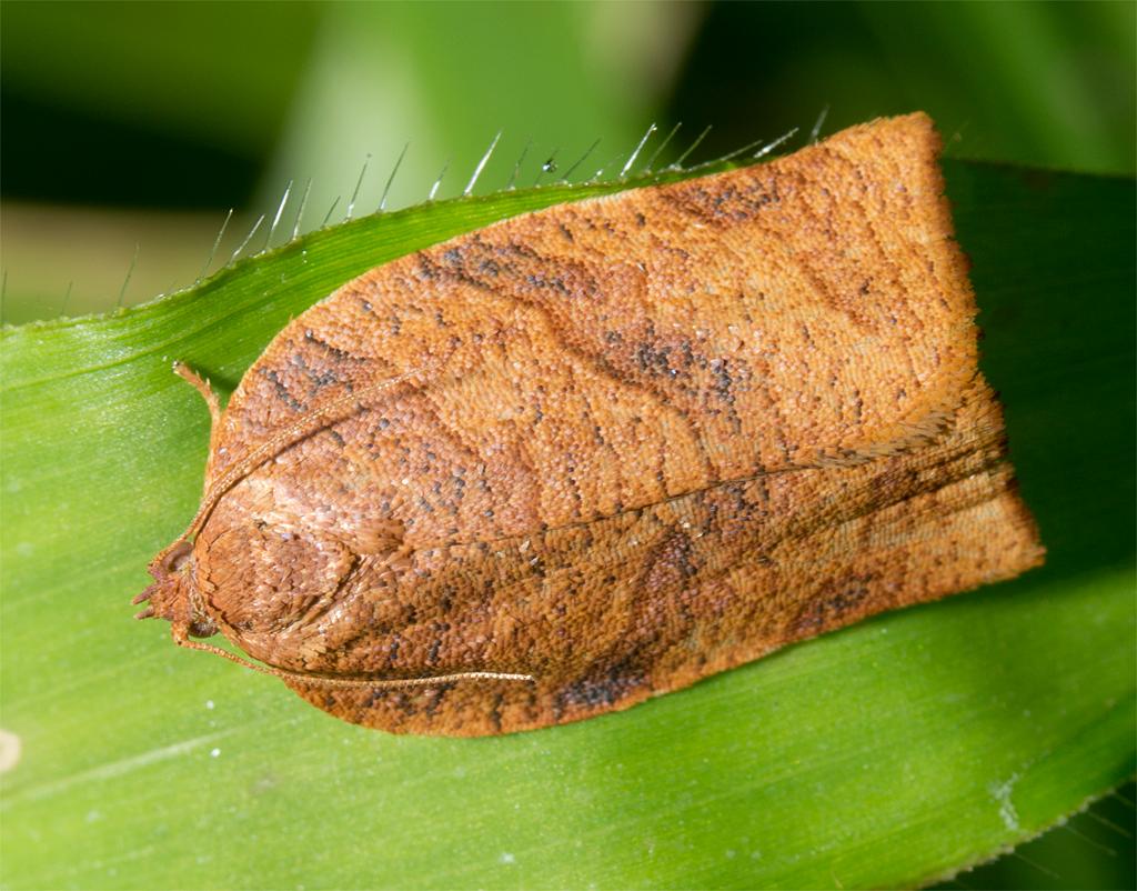Moth 91