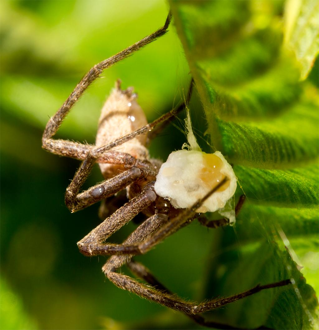 Spider 163