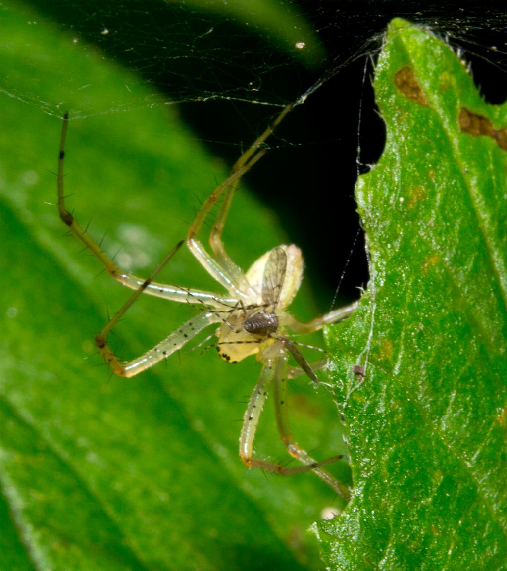 Spider 170