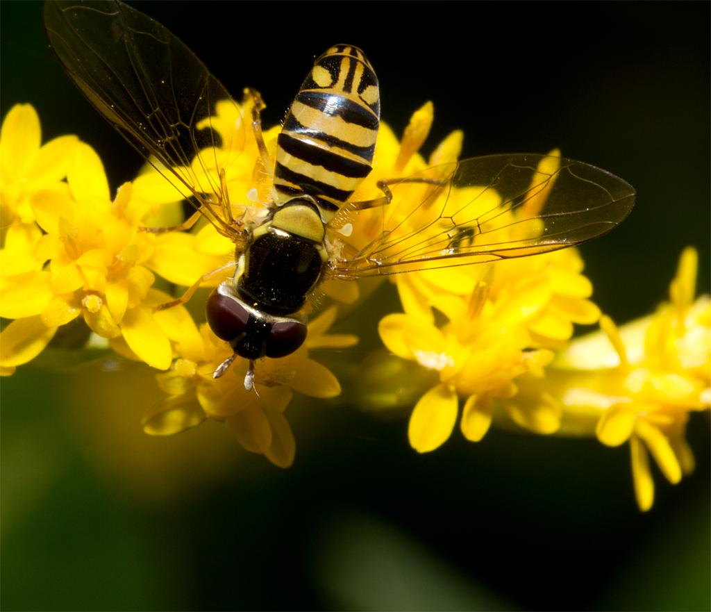 Bee Mimic 106
