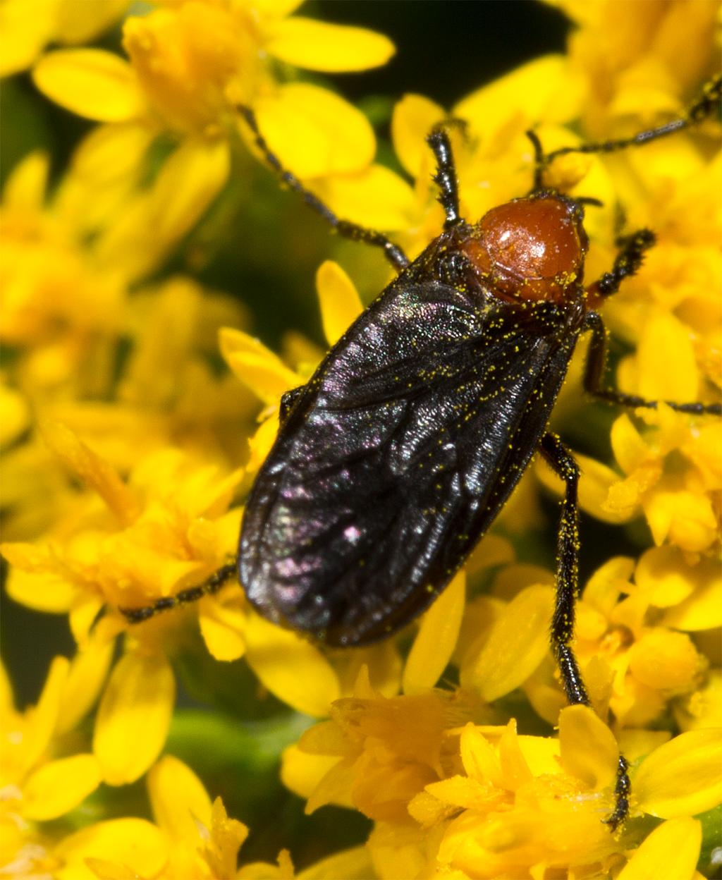 Beetle 103
