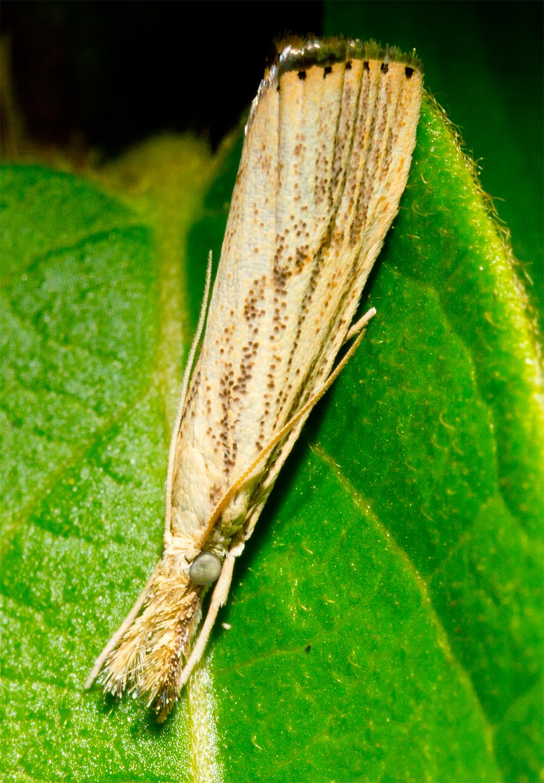 Moth 97