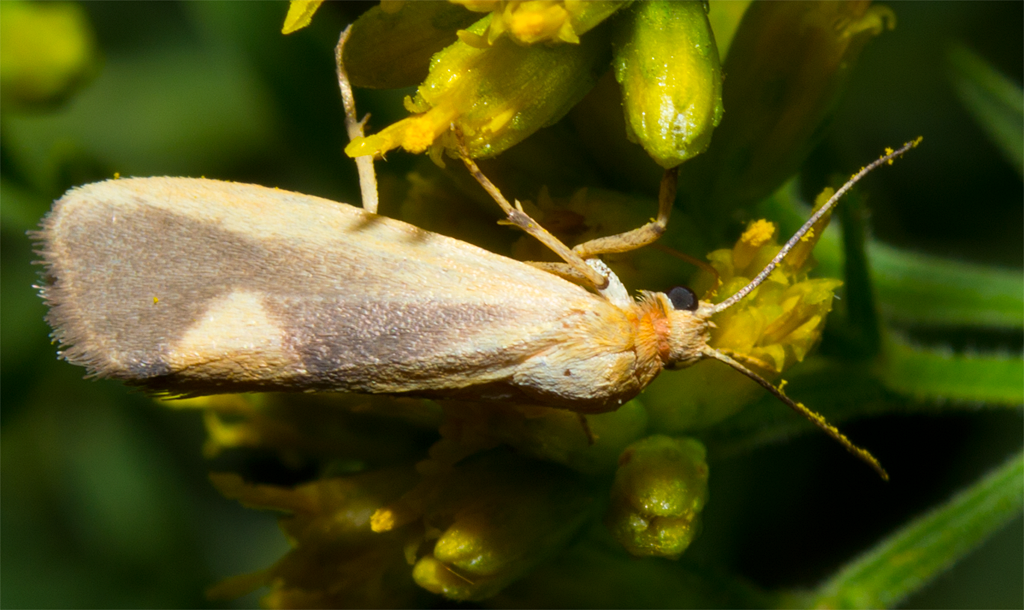 Moth 98