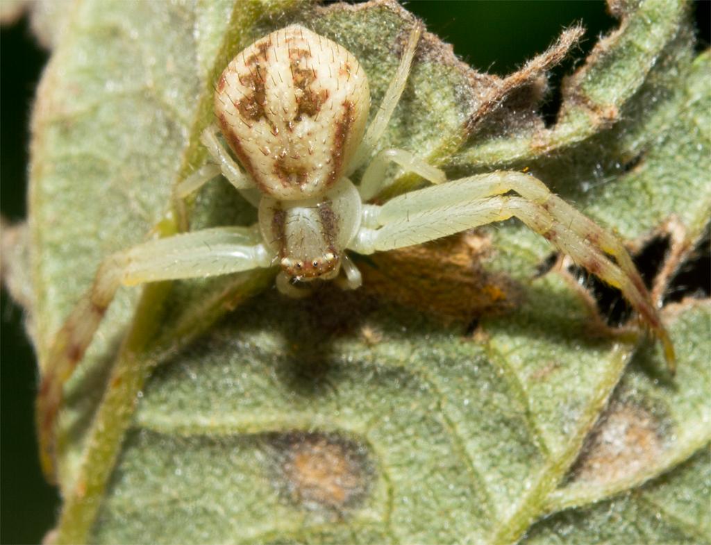 Spider 205