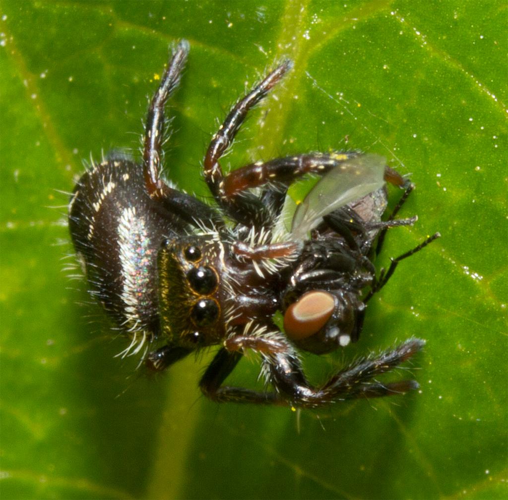Spider 209