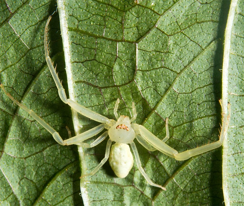 Spider 210