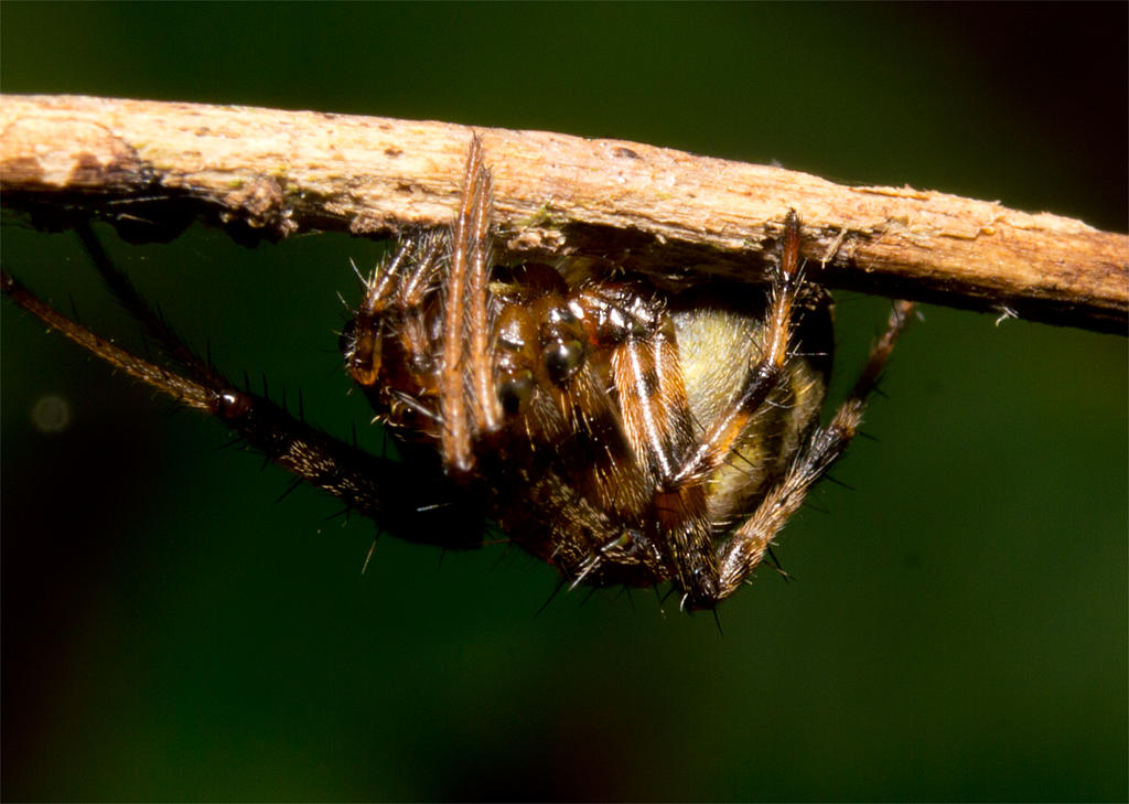 Spider 212