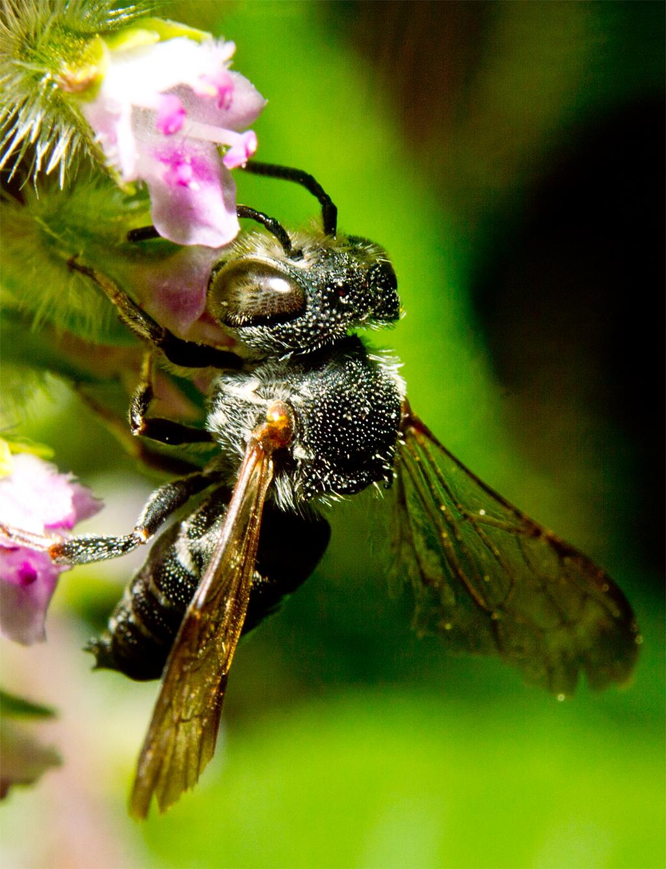 Wasp 63