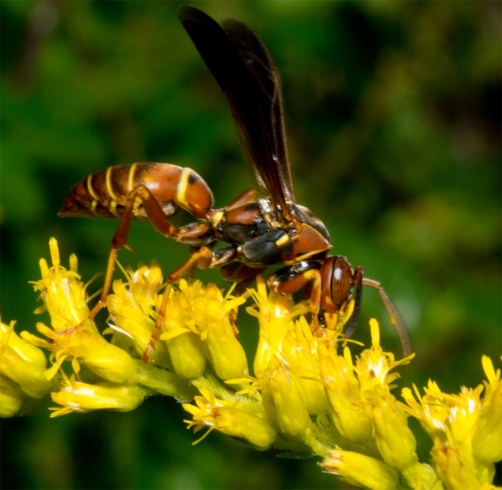 Wasp 67