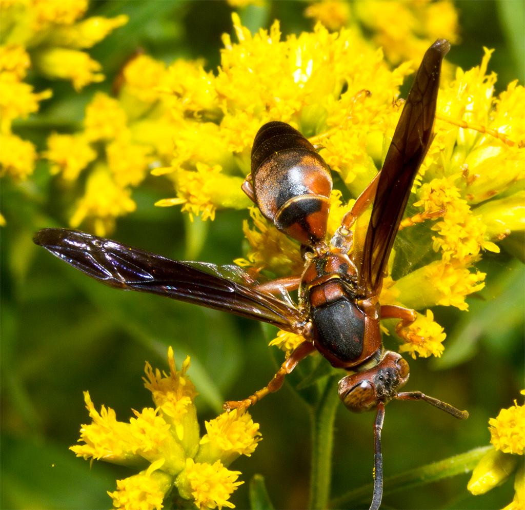 Wasp 69