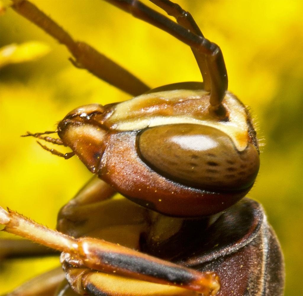 Wasp 72