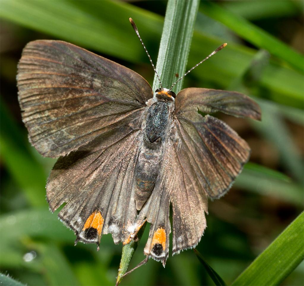 Butterfly 38