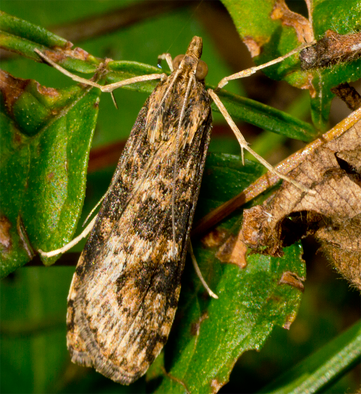Moth 102