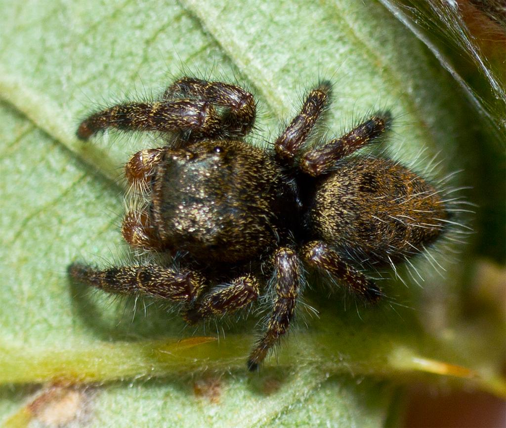 Spider 220