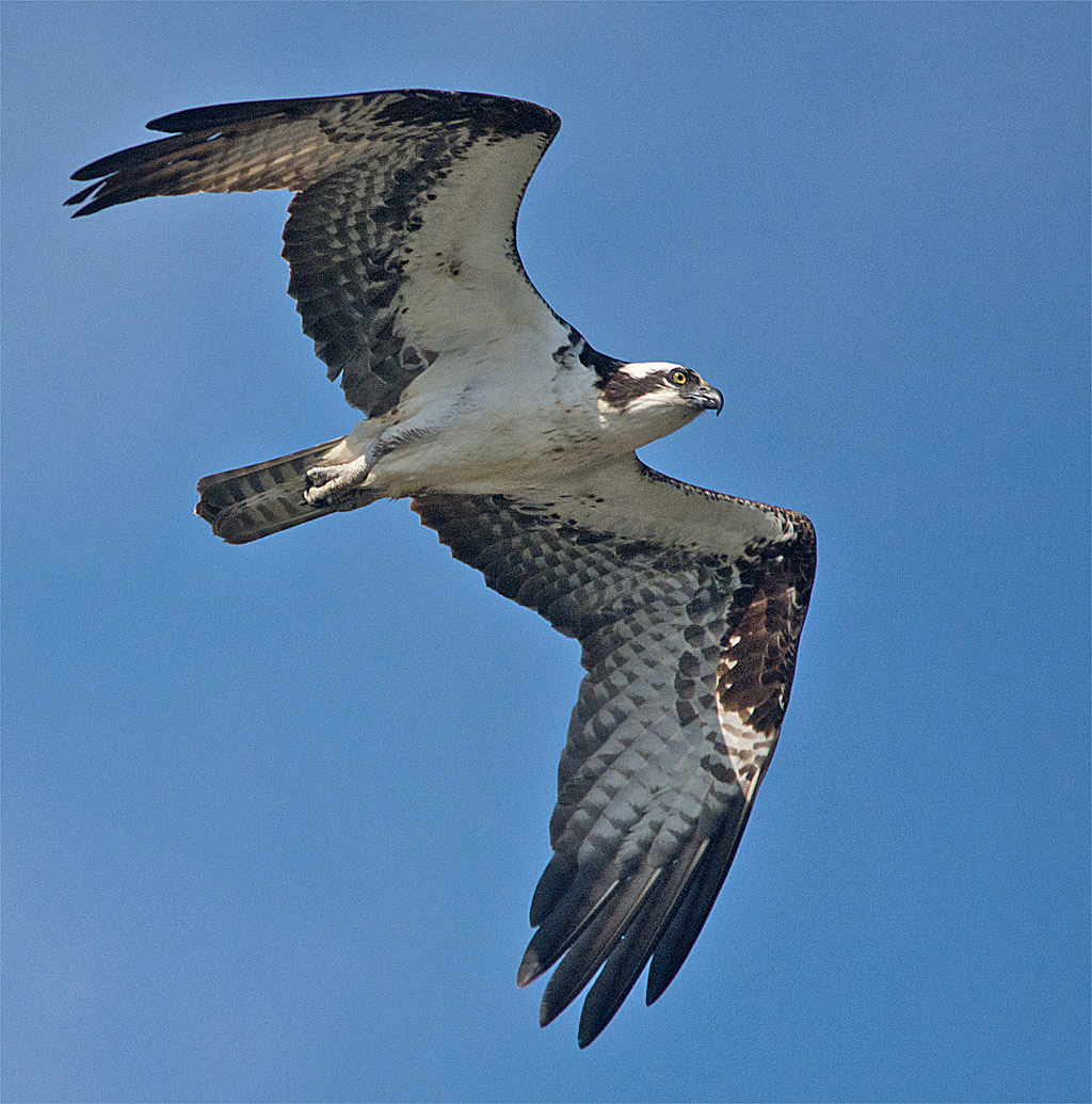 Osprey 320