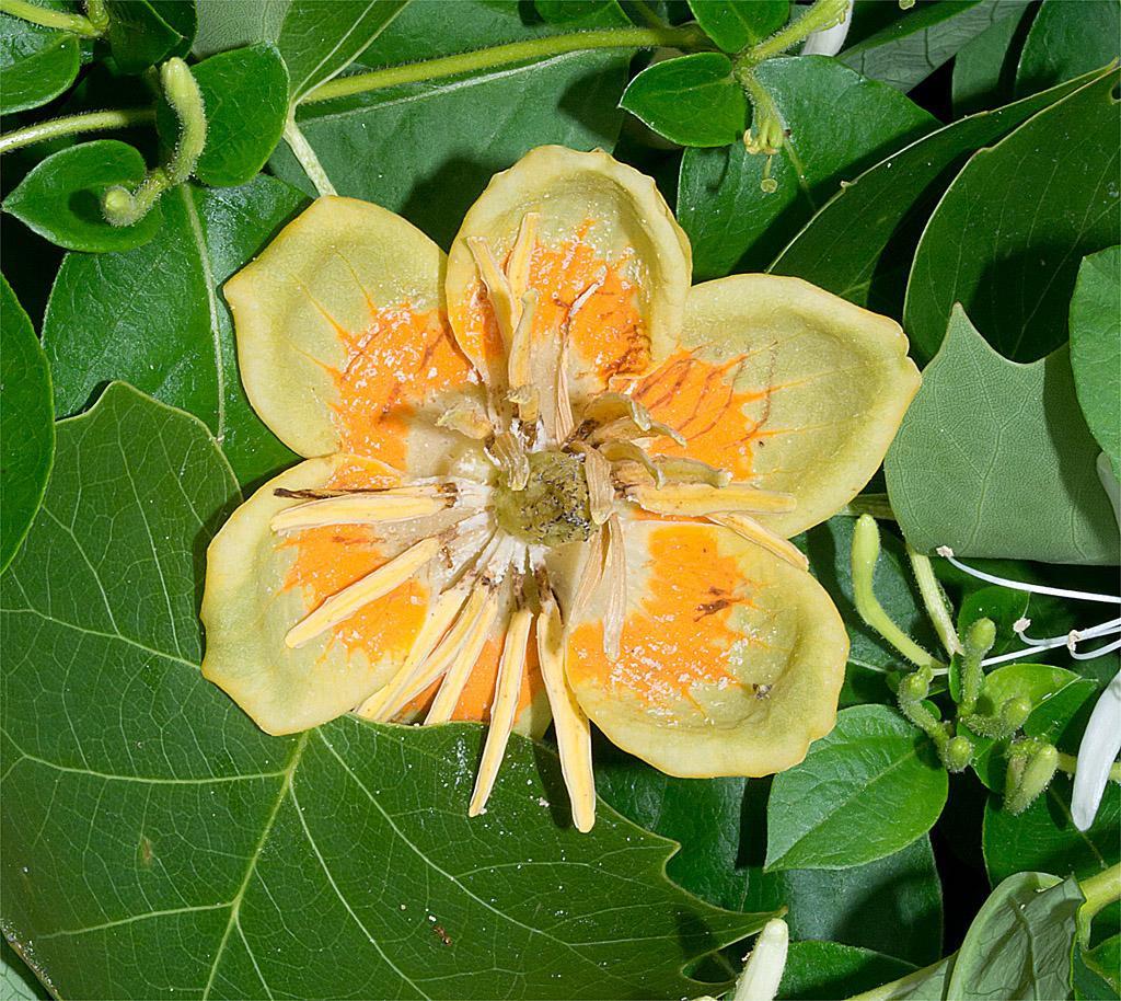 Flower 42