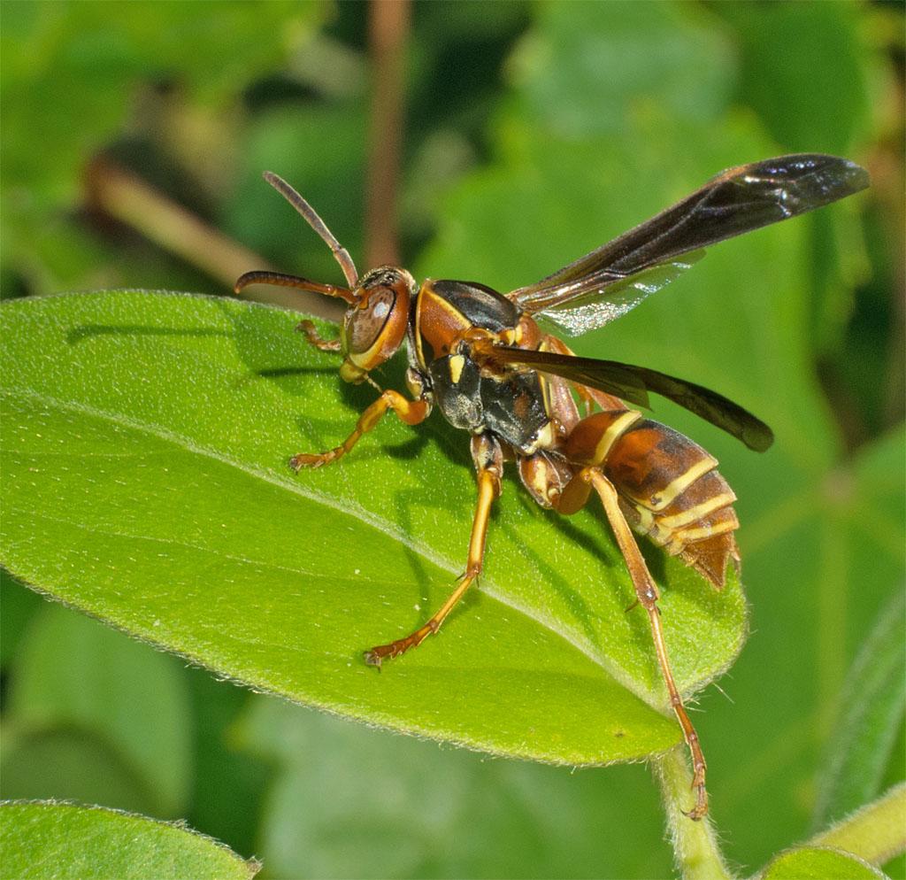Wasp 9
