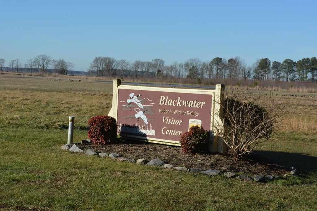 Blackwater NWR 1