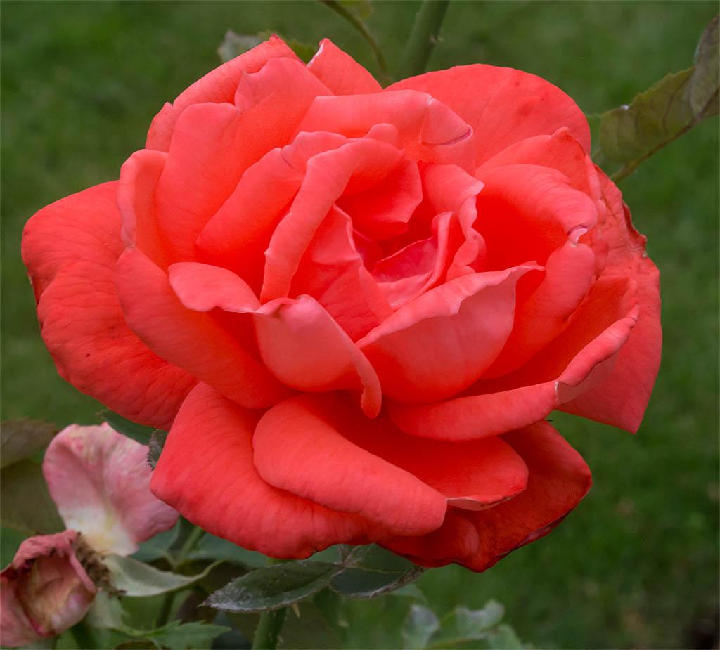 Flower 80