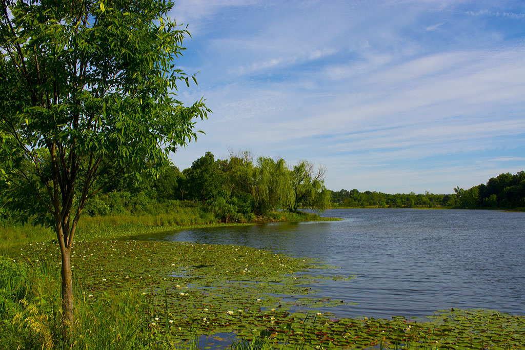 Lake Artemesia 24