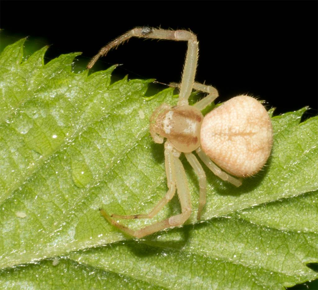 Spider 270