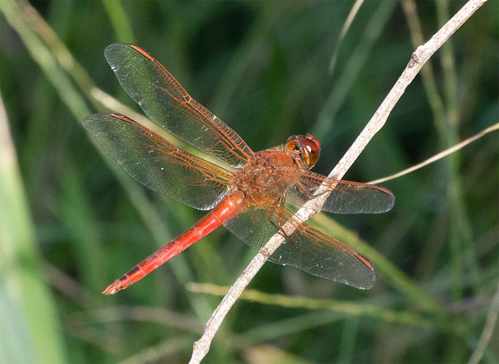 Dragonfly 82