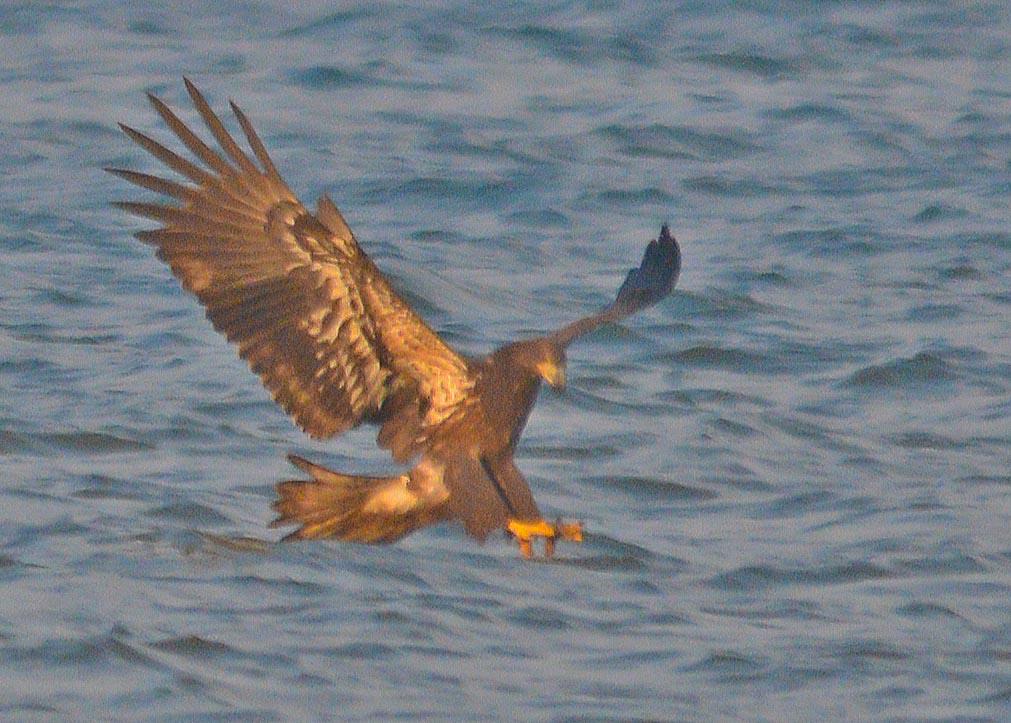 bald-eagle-2016-79